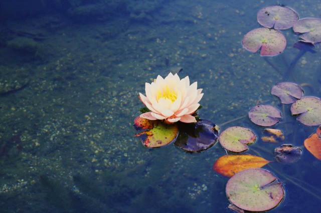 lotus-sw.jpg